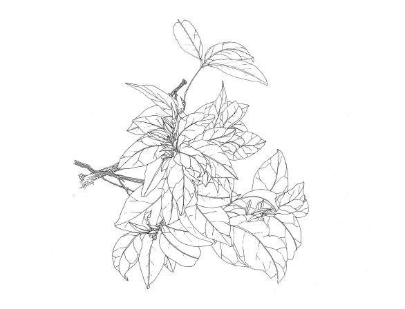 flora - orange